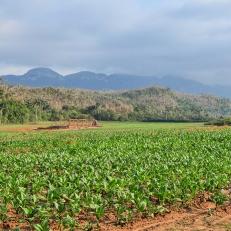Tabaceros, Valle de Vinales, Cuba