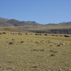Fahrt zum Köl Tür See, Kirgistan